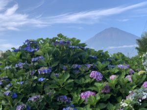 富士山と紫陽花