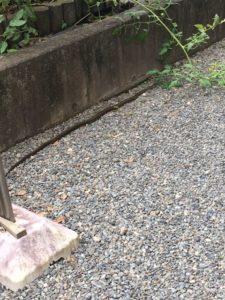 庭にヘビあらわる