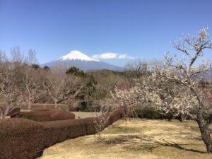 かぐや岩本山カフェと梅
